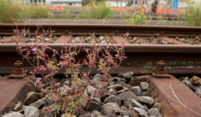La biodiversité urbaine et ses racines