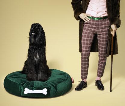 Meubles et accessoires déco, design pour animaux, chats et chiens